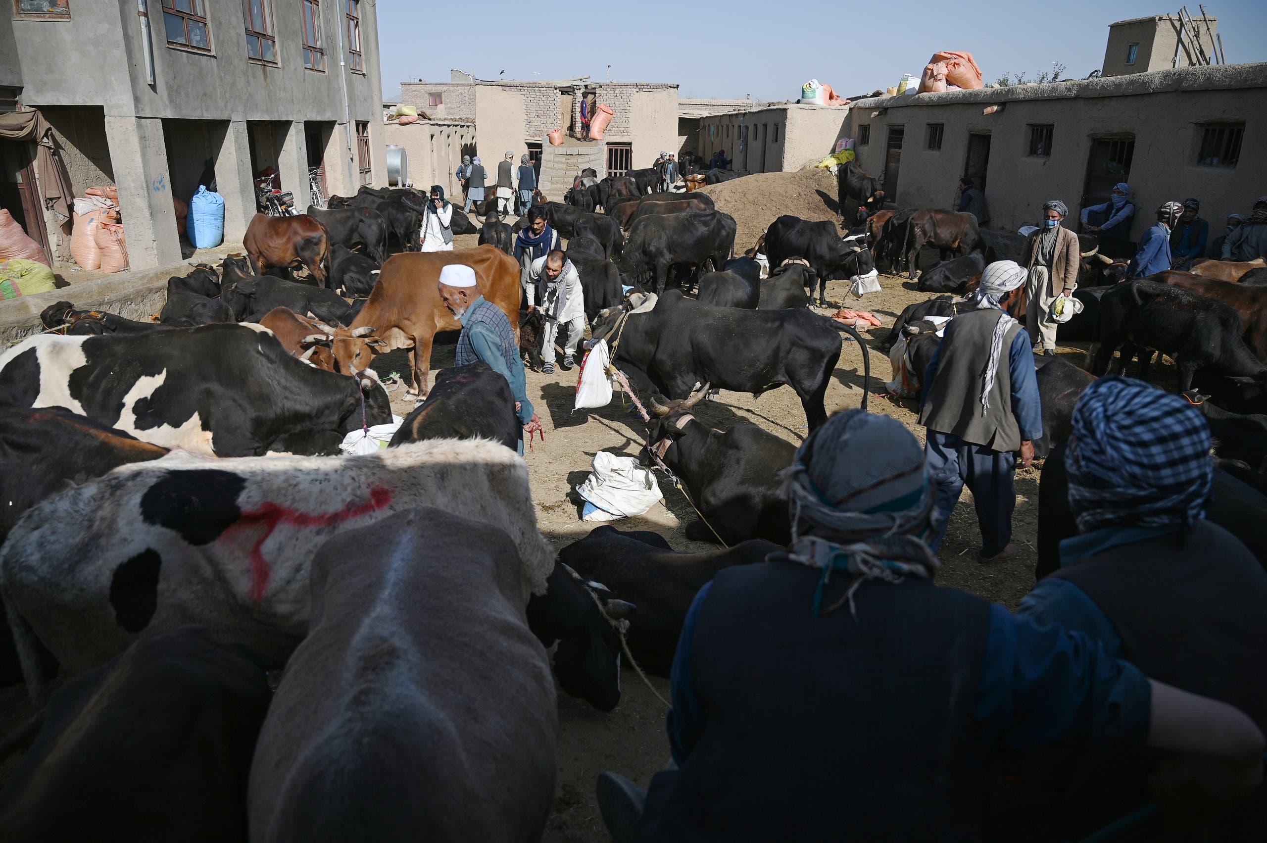 سوق للأضاحي في محيط كابول (أرشيفية)