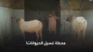الخروف بدل السيارة.. في محطة غسيل باكستانية!