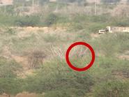 """فيديو.. إحباط عملية إرهابية لـ""""كتائب الموت"""" الحوثية بالحديدة"""