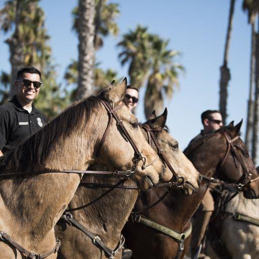 هكذا تستخدم قوة الفضاء الأميركية الخيول في قواعدها
