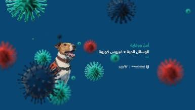 """""""كلاب مدربة"""" تكشف مصابي كورونا في الجمارك السعودية"""