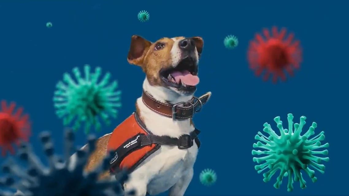 Saudi Customs trains sniffer dogs to detect coronavirus infected individuals. (Twitter/@saudicustoms)