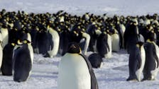 Penguin poop spotted from space confirms additional Antarctica colonies