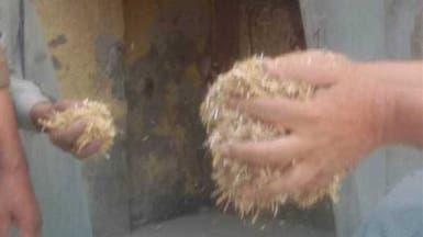 إغلاق فرن يصنّع الخبز من علف الماشية في مصر