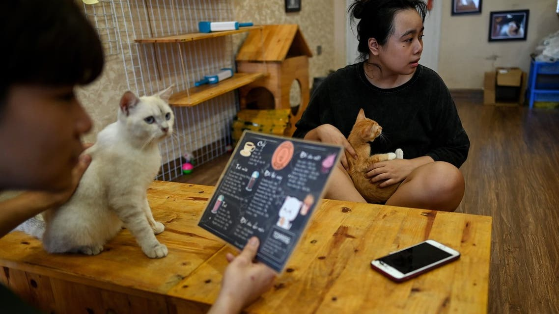 Visitors play with rescued cats at Ngao's Home, a one of its kind cafe and cat rescue place in Hanoi on August 7, 2020, ahead of the International Cat Day. (AFP)