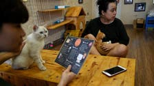 Vietnam cat cafe is purr-fect place for cat lovers and rescued creatures