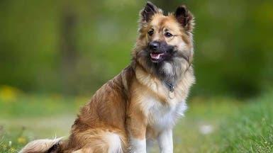 کرونا باعث لغو قدیمیترین نمایشگاه «سگ» در جهان شد