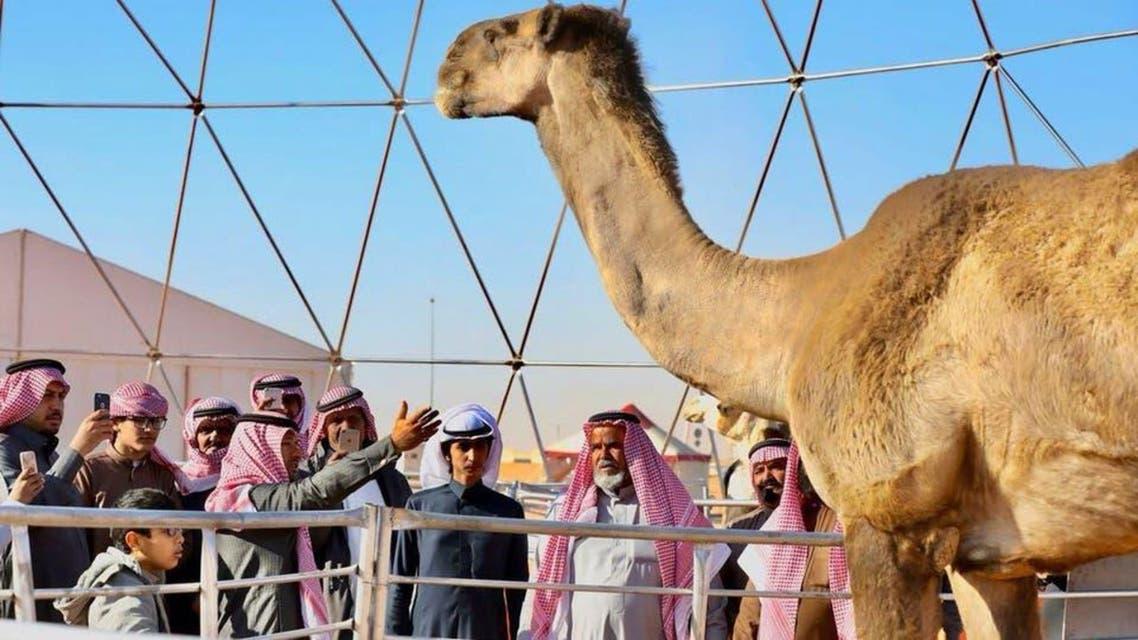 SAUDI: Camel Festival