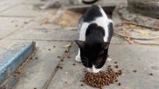 سعوديون يبادرون لإطعام ومعالجة قطط شوارع جدة التاريخية