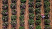 سعودی وزارت ثقافت کے زیر اہتمام رنگا رنگطائف 'گلاب میلے' کا آغاز