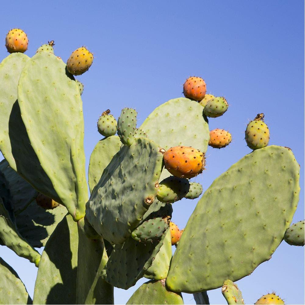 هذه النبتة الصحراوية أقوى من الألوفيرا على التجاعيد