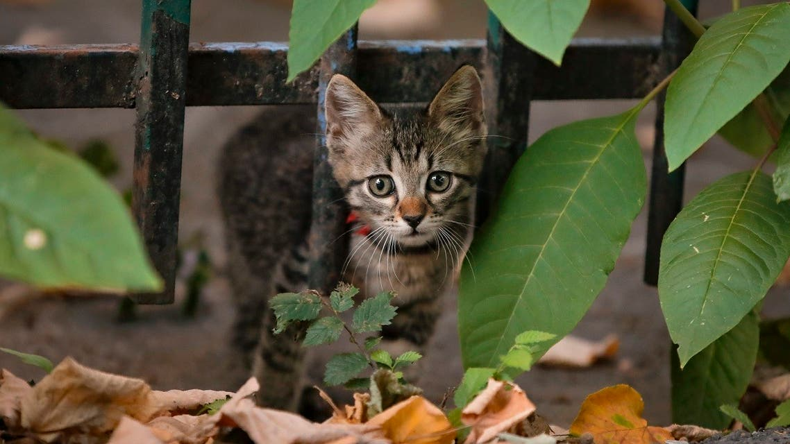 A kitten stares at passers by with its head between the bars of a fence in Bucharest, Romania. (Reuters)