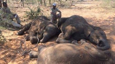 صور لمجزرة فيلة في زيمبابوي.. والسلطات تحقق