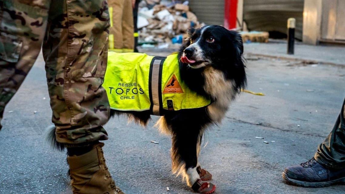 Flash, the Chilean rescue dog. (Image Credit: Social Media)