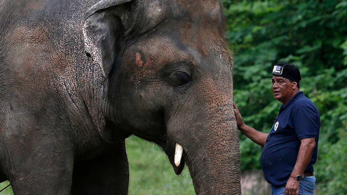 A veterinary from the international animal welfare organization 'Four Paws' offers comfort to an elephant named 'Kaavan' during his examination at the Maragzar Zoo in Islamabad, Pakistan, Friday, Sept. 4, 2020. (AP)