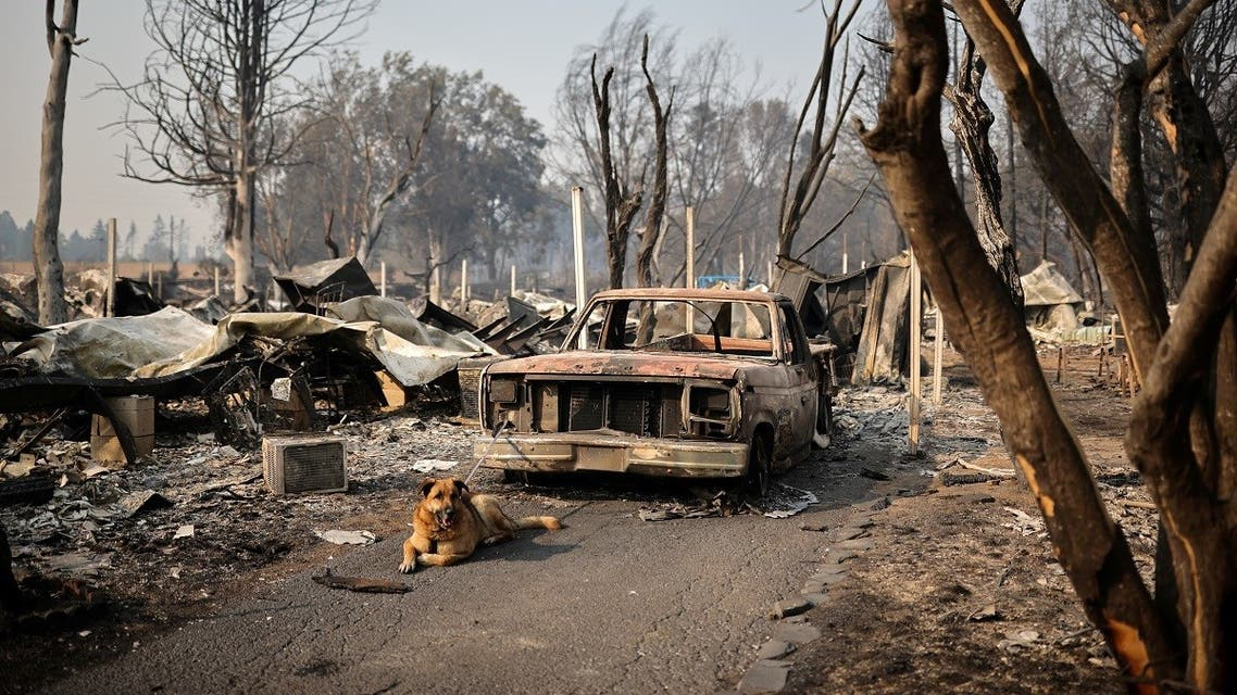 A dog is tied up to a burnt car in a neighborhood after wildfires destroyed an area of Phoenix, Oregon, US, September 10, 2020. (Reuters/Carlos Barria)
