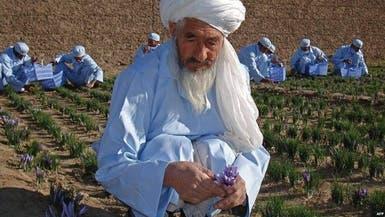 «بابای زعفران» افغانستان درگذشت؛ اشرف غنی مرگ وی را یک ضایعه بزرگ خواند