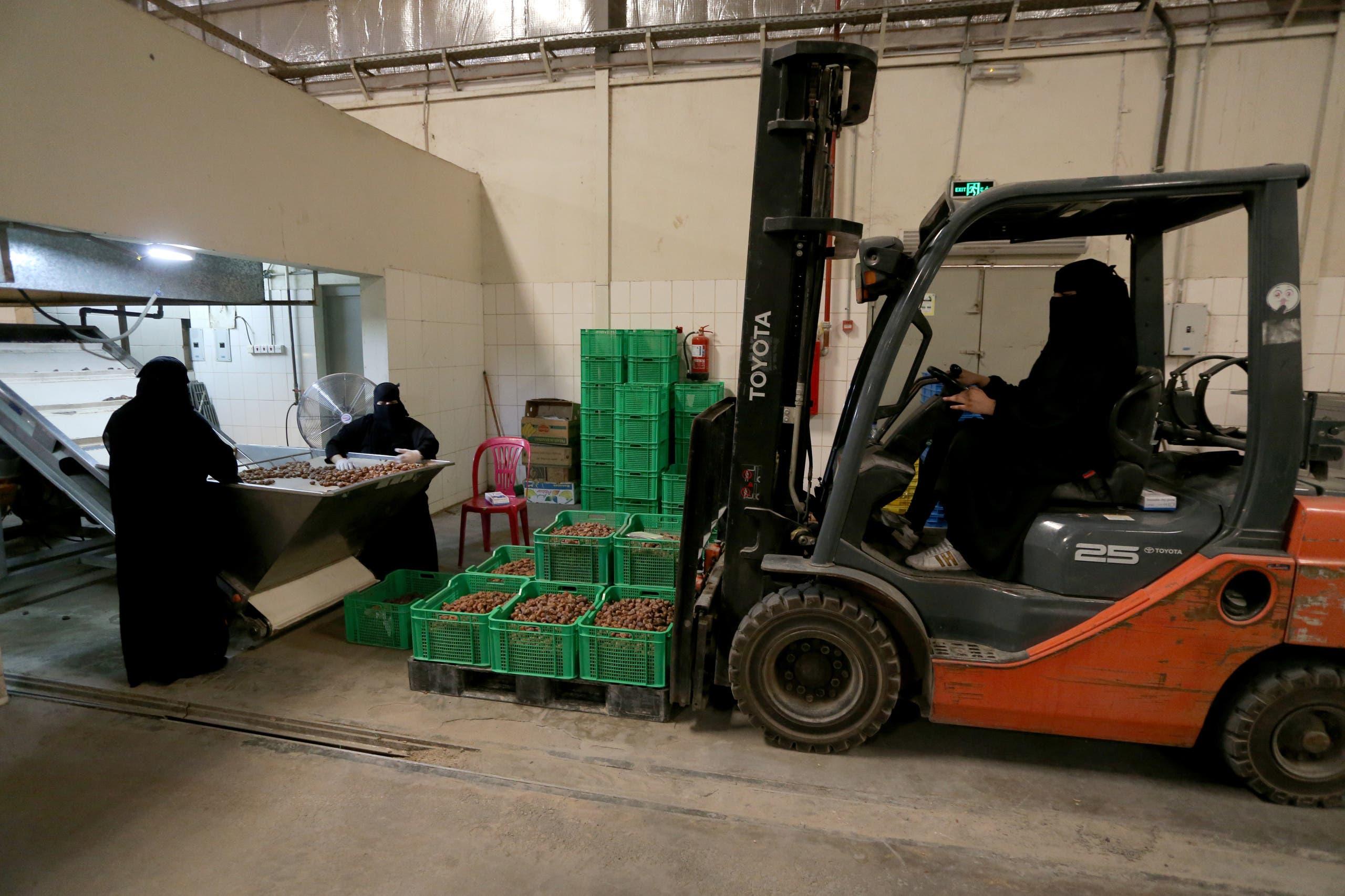 A Saudi woman drives a forklift to transport dates at a factory in Al-Ahsa, Saudi Arabia. (Reuters)