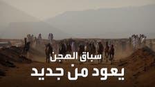 500 جمل شاركوا في السباق.. عودة سباقات الهجن في سيناء