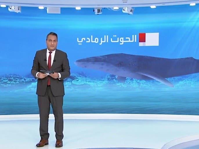 موت غامض للمئات من الحيتان الرمادية النادرة