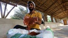 In this Saudi Arabian farm in al-Ahsa, rare hassawi rice is 'as precious as gold'