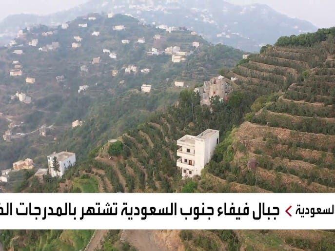 نشرة الرابعة | شاهد جمال المدرجات الخضراء في جبال فيفاء جنوب السعودية