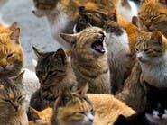 بیخانمانی یک مرد اسپانیایی که 110 گربه دارد
