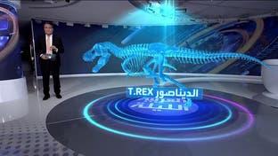 هيكل ديناصور ضخم في مزاد.. شاهد قبل البيع