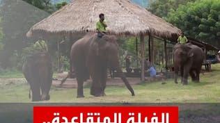 """""""الفيلة المتقاعدة"""" مصيرها مجهول في ظل كورونا"""