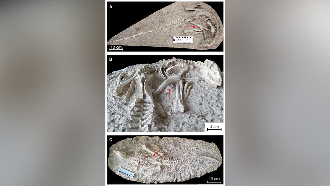 Paleontologists discover 125 million-year-old dinosaur fossil in China