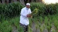 خطط لتقديم قروض لمشاريع زراعية في السعودية بـ3.5 مليار ريال