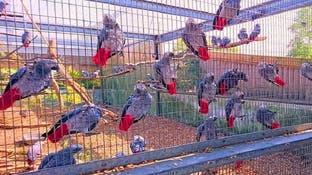 حديقة حيوان تسجن ببغاوات اعتادت استقبال الزوار بالشتائم