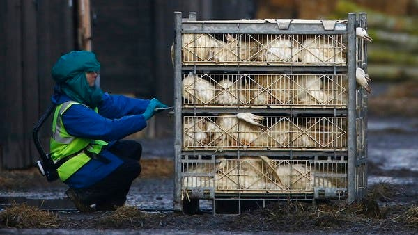 EU warns about possible avian flu outbreaks, amid coronavirus pandemic
