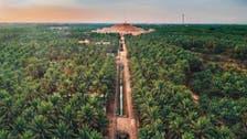 سعودی عرب : کھجور کے درختوں کا دنیا کا سب سے بڑا باغ گینز بک میں شامل