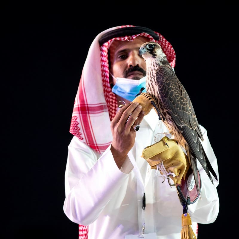 Saudi program to boost population of wild falcons praised by international experts