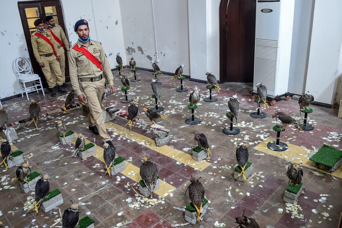 Custom officials walk among falcons that were recovered from illegal captivity, kept in a room during a press briefing with customs authorities in Karachi on October 17, 2020. (Rizwan Tabassum/AFP)
