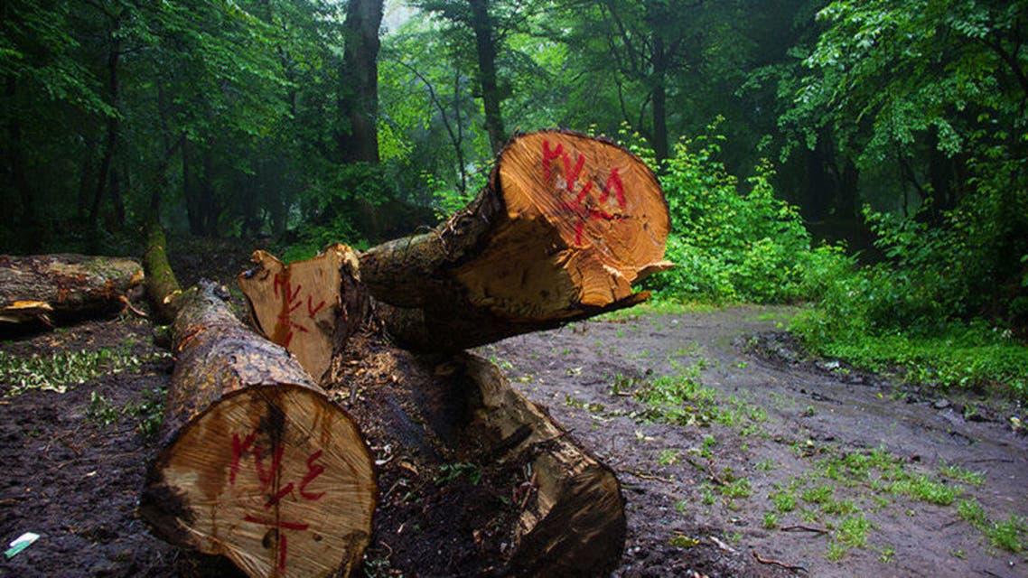 یک کارشناس محیط زیست: 80 درصد جنگلها و منابع طبیعی ایران نابود شده است