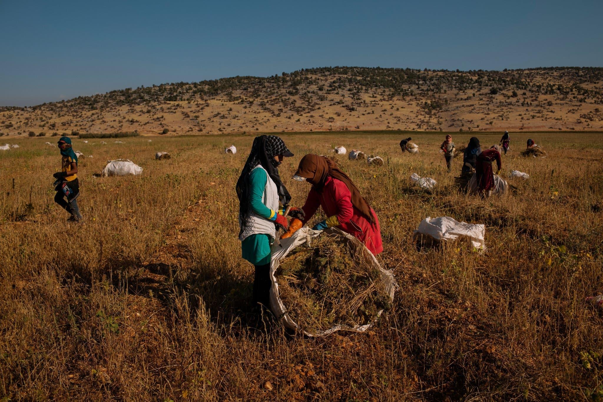 مزارعون بمزارع اليمونة في لبنان