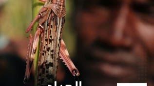 إثيوبيا تواجه أسوأ غزو للجراد منذ 25 عاماً