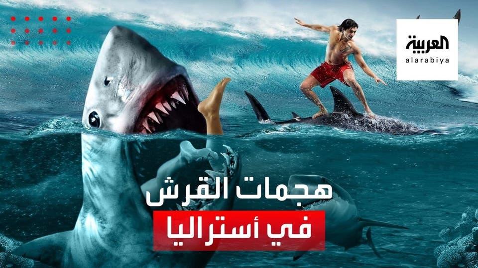 تصاعد هجمات القرش على البشر قبالة شواطئ أستراليا