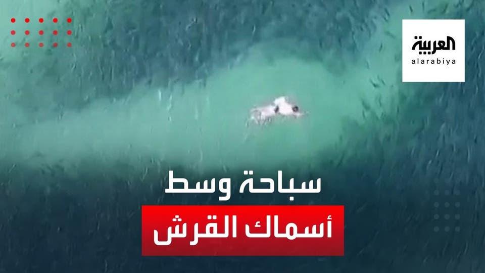 سباحة وسط أسماك القرش في أستراليا
