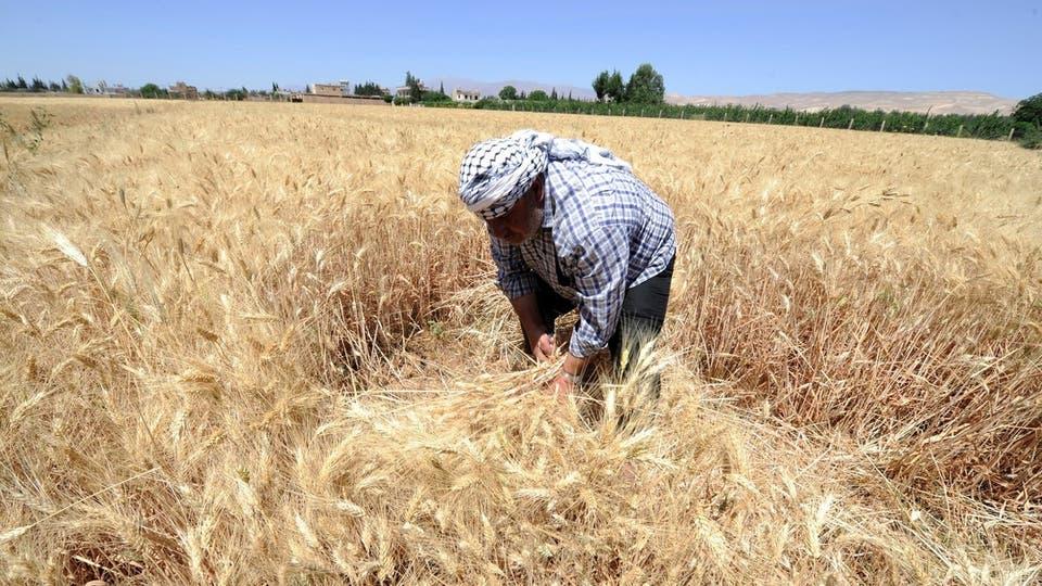 رئيس الوزراء السوري: القمح في البلاد يكفي الخبز لمدة 45 يوما فقط