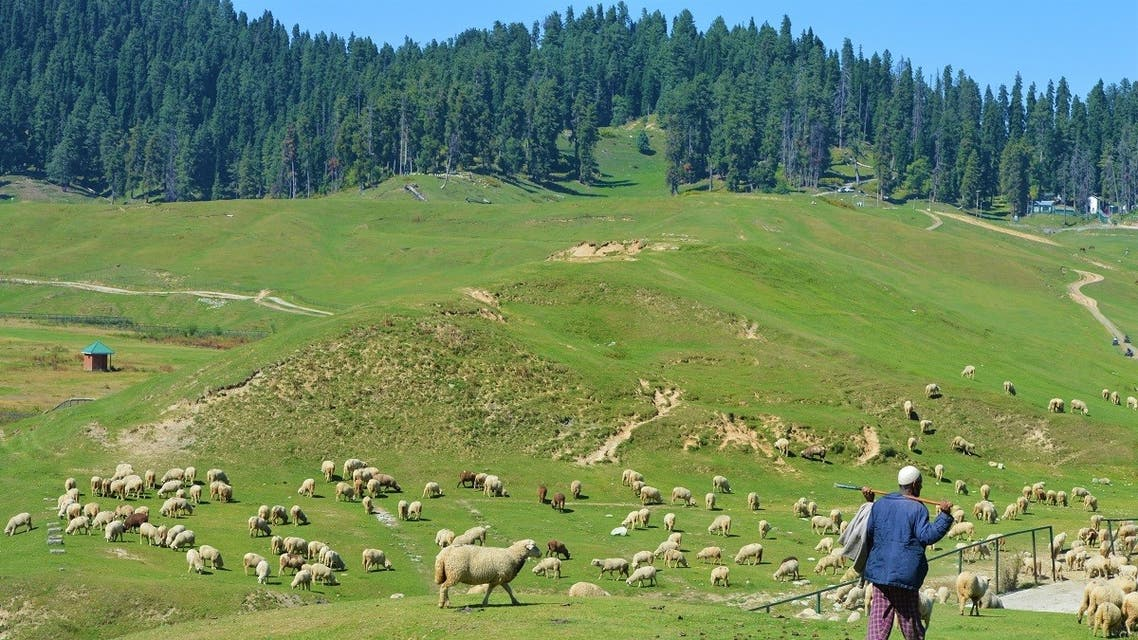 A herder grazes his sheep in Gulmarg meadow, a renowned tourist resort 45km west of Srinagar, Kashmir, India. (Reuters)
