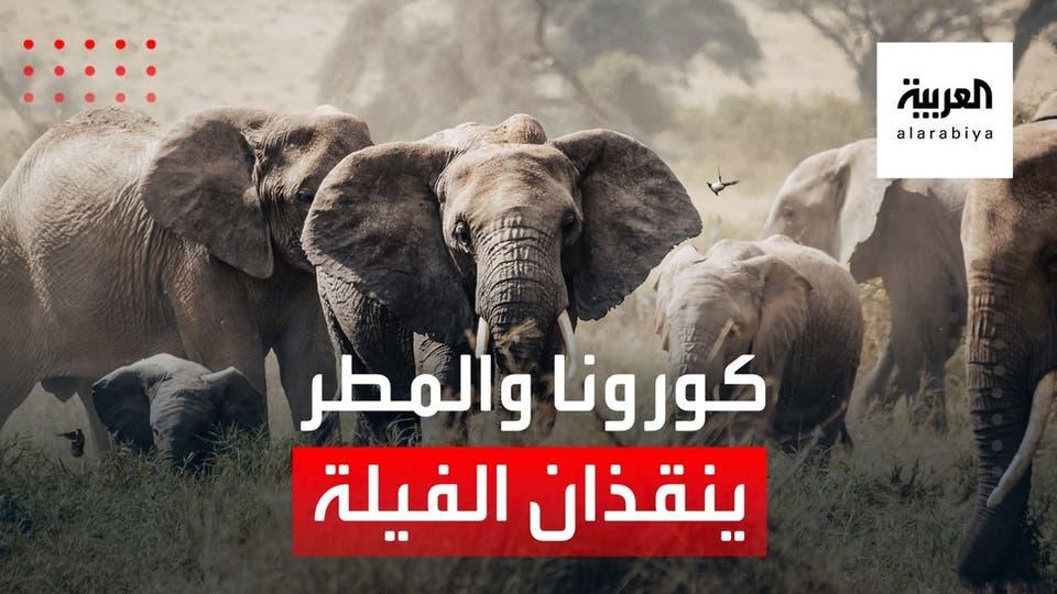 كينيا تشهد مولد 205 فيلة في عام كورونا