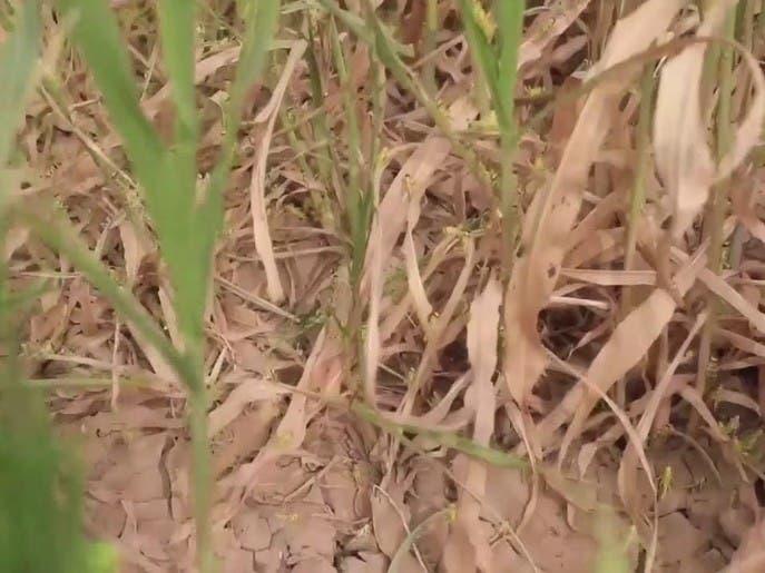 تضرر كبير بالقطاع الزراعي في اليمن نتيجة حرب الحوثي