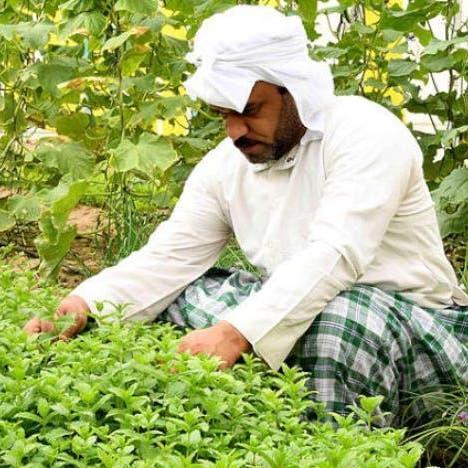 5 مهن لا يشملها نظام عقود العمل الجديدة في السعودية.. تعرف عليها