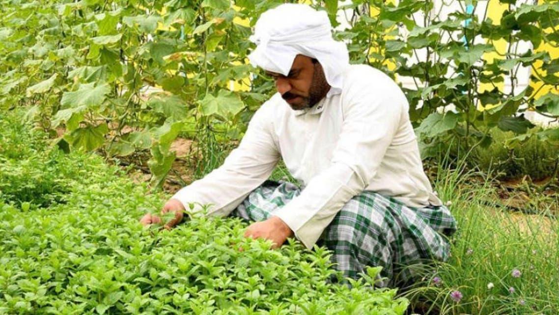 عمالة وافدة الزراعة السعودية