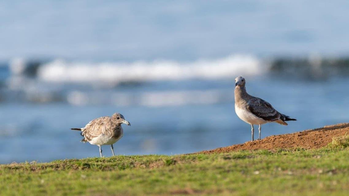 پرندوں کی ہجرت
