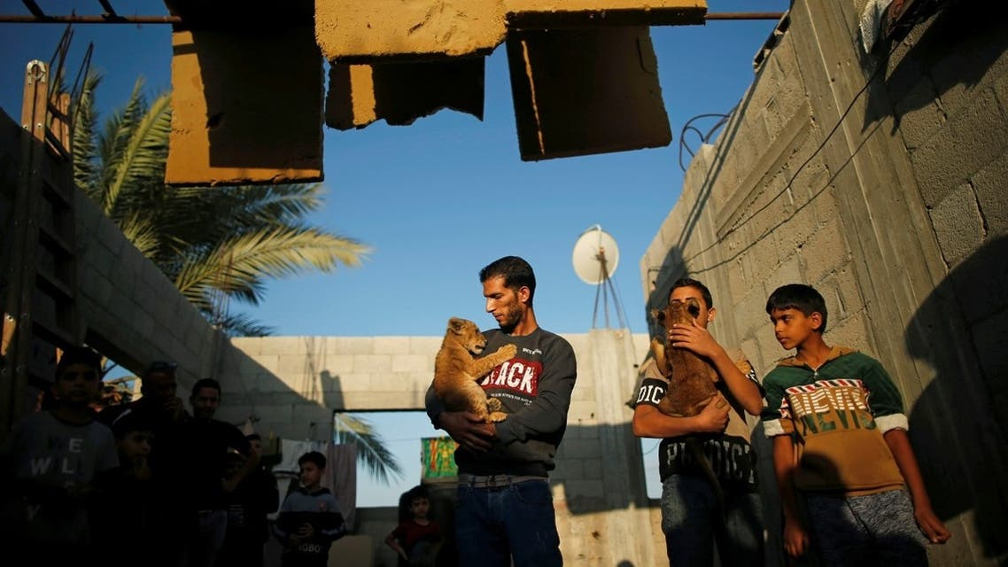 Naseem Abu Jamea and a boy hold pet lion cubs which Abu Jamea bought from a local zoo and keeps on his house rooftop, in Khan Younis, Gaza Strip November 10, 2020. (Reuters/Suhaib Salem)