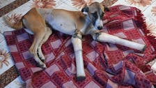 Indian street dog's rocky road to recovery finds new home in Britain